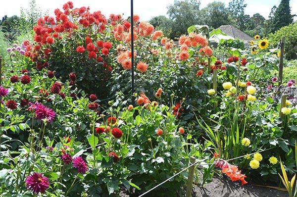 Storrington In Bloom 2016 best allotment
