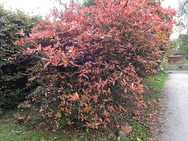 SCS Autumn Colours