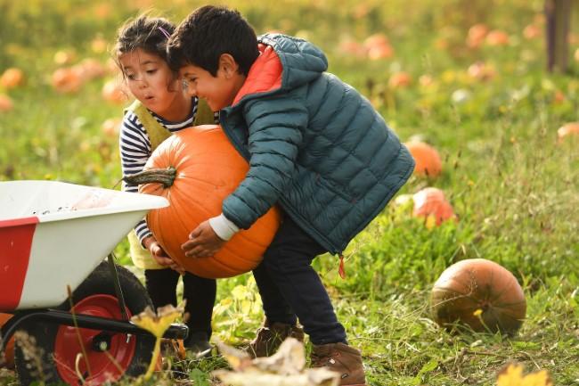 Sompting Pumpkin Picking Patch