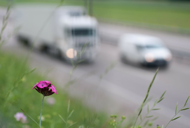 traffic and flower