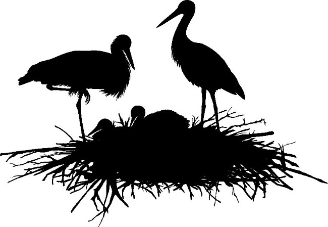 white stork survey
