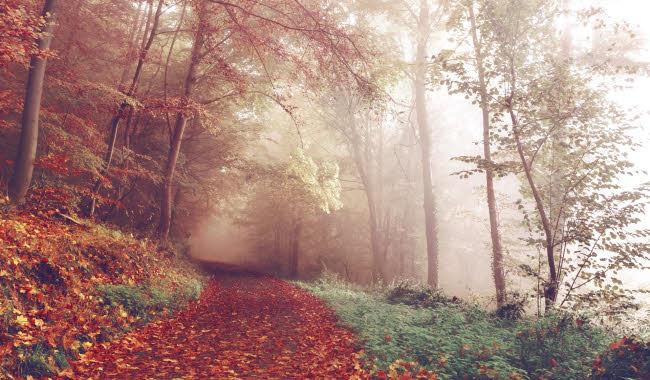 Autumn path in woods