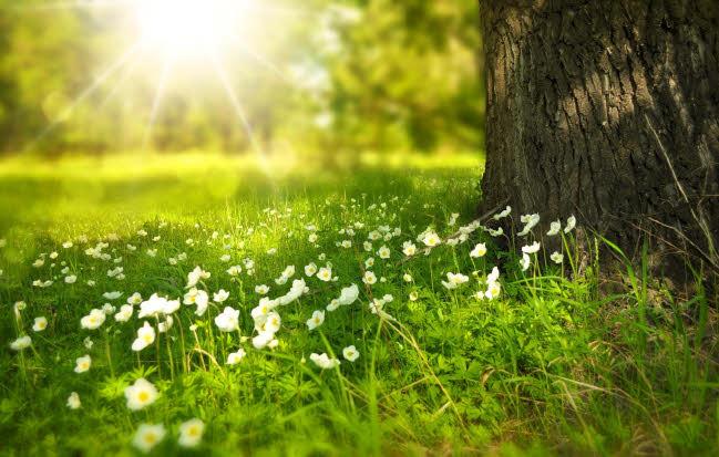 Photo of flowers in meadow