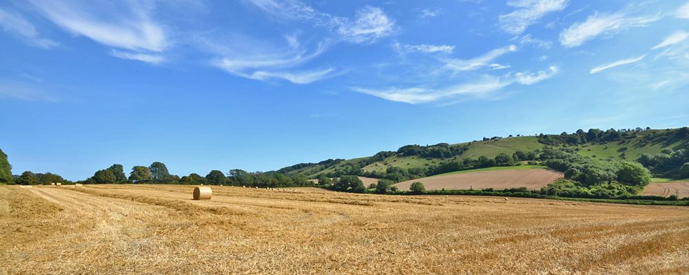 Downs harvest, Storrington